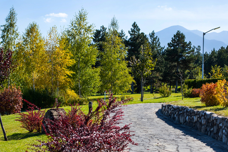 yellow trees: Vibrant autumn panorama background with colorful green, red and yellow trees and stone path