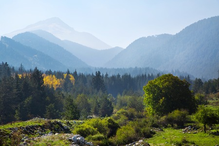 panoramic image of mysterious misty fog pine tree forest with yellow spot and foggy mountains at the background Фото со стока