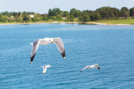 spreaded: White seagull flying over water. Freedom concept. Place for text