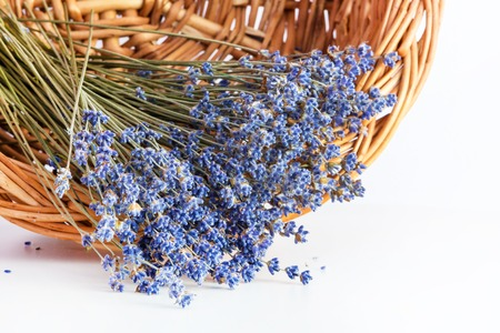 Bunch of dry wild mountain lavender flowers in basket on white background Stock Photo