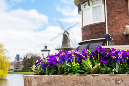traditional windmill: Traditional windmill and flowers, Holland background with copy space Stock Photo