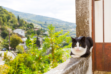 Cat and aerial view of mountain greek makrynitsa village