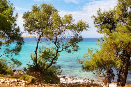 Summer vacation background with turquoise sea water bay and pine trees in Thasos Island, Greece