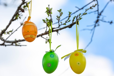 eastertime: Colorful Easter eggs on the spring tree with new leaves