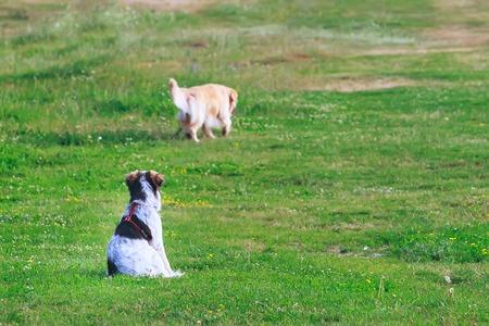 hond zitten en kijken naar vriend weg te gaan. vertrekconcept Stockfoto