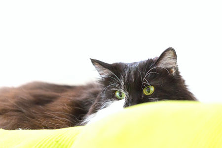 Cat looking unfriendly from the sofa, copy space white background Stock Photo