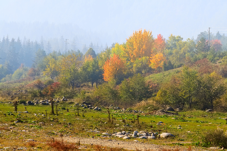 autumn panorama background with colorful green, red and yellow trees and foggy mountains