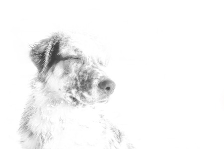 Black and white stylized dog portrait with closed eyes, admiring and chilling, concept emotional pet isolated on white background