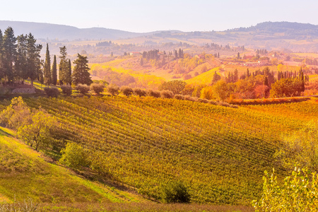 Tuscan autumn panoramic landscape with vineyards, cypress trees, houses in Tuscany, Italy, Europe Stock Photo
