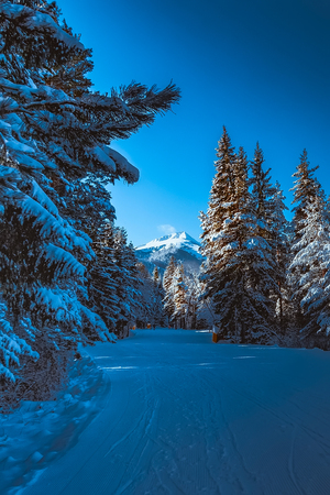 ski resort panoramic view with slope in the forest and snow mountains, Bansko, Bulgaria 版權商用圖片 - 114894791