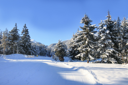 Bansko resort panoramic view with ski slope in the forest and snow trees, Bulgaria