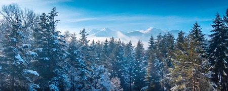 Aerial winter holiday vacation background with pine trees and snow mountain peaks, copy space 版權商用圖片