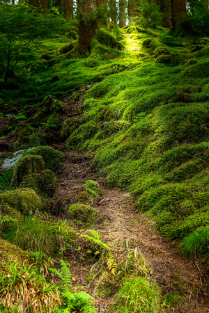 Norwegian mysterious forest at troll path lightened with sun rays with fairy tale green tree moss 版權商用圖片