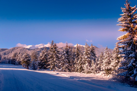 winter christmas holiday vacation background with pine trees and snow mountain peaks, colorful sunset or sunrise, copy space