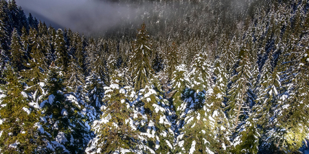 winter mountains banner vacation background with snow covered pine trees aerial view 版權商用圖片