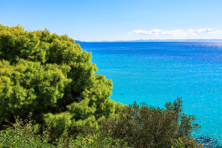 Summer vacation background with blue sea water bay and pine tree in greek island, Greece