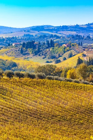Tuscan autumn panoramic landscape with vineyards, cypress trees, houses in Tuscany, Italy, Europe 免版税图像