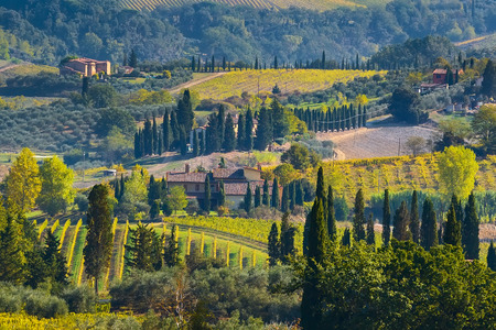 Vineyards in Chianti region in province of Siena. Tuscany landscape, Italy