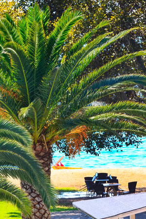 Summer background with palm tree on the sandy beach and sea view in Greece island Stock Photo