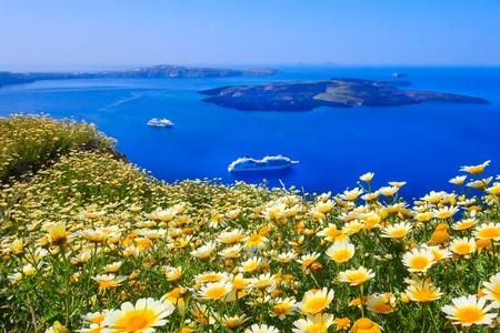 Santorini, Greece spring panoramic blue sea caldera view with flowers, volcano island and cruise ships