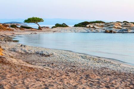 Vourvourou, Sithonia, Greece, Halkidiki, mediterranean landscape of Karidi sandy beach with pine tree on coast Banco de Imagens
