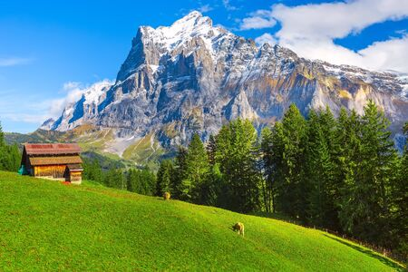 Grindelwald, Switzerland aerial autumn Swiss Alps mountains panorama landscape, wooden chalet on green field and high snow peaks in background, Bernese Oberland, Europe