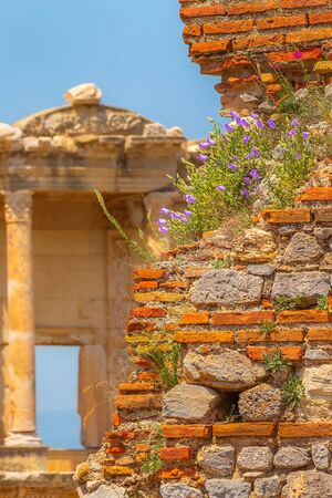 Ephesus, Efes, Turkey defocused Celsus Library, old ruins with spring flowers close-up details view background