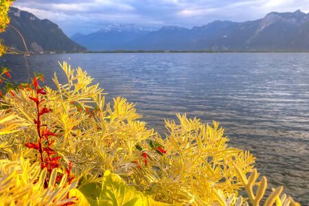 Panoramic view of colorful yellow plants, Lake Geneva, Switzerland from Montreux promenade