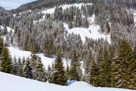Panorama of winter snow landscape in Ausrian Alps mountains and pine trees, Austria Фото со стока