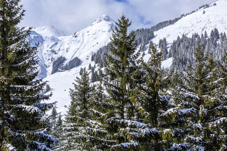 Panorama of winter snow landscape in Austrian Alps mountains and pine trees, Austria