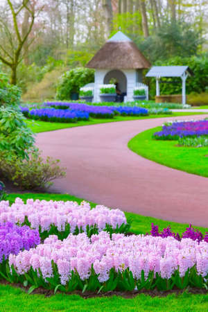 Keukenhof spring garden colorful purple and lilac hyacinth flowers blossom and defocused fairy tale house, Netherlands Archivio Fotografico