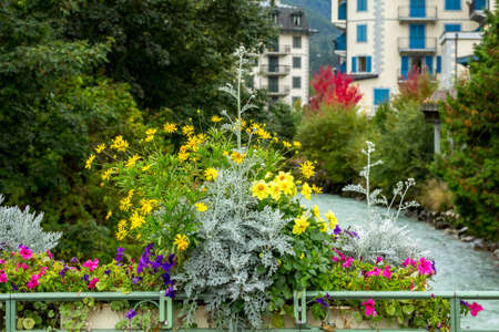 Chamonix Mont-Blanc, France close-up colorful flowers and defocused river Arve and houses in city center of famous resort, summer