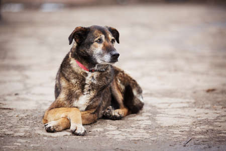 Dog with sad eyes in shelter for adoption