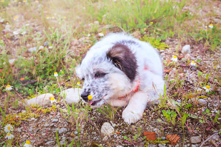 Puppy sniffing the flower, close-up portrait