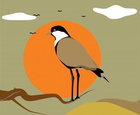 little bird: lindo pajarito Vectores