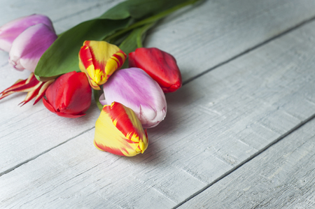 tableau: Still life with colorful tulips painting-style Stock Photo