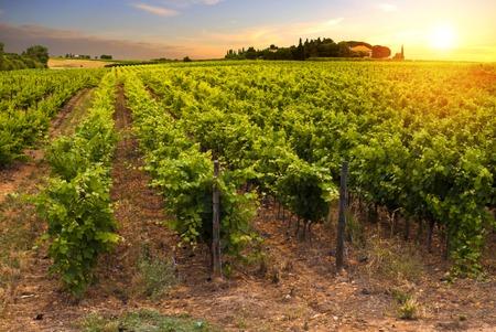 Rode wijn met vat op wijngaard in groene Toscane, Italië.