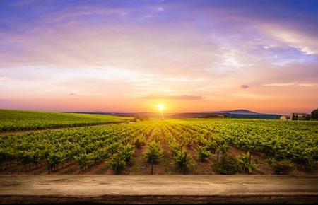 Rode wijn met vat op wijngaard in groene Toscane, Italië, Stockfoto - 66337063