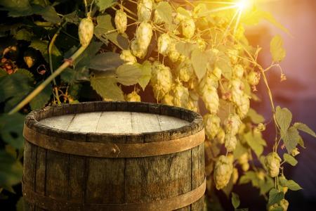 hopgarden: glass of beer with hop cones weather, wooden Stock Photo