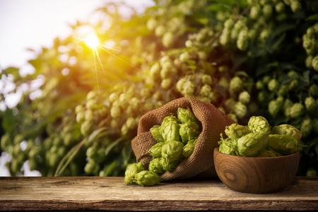 hopfield: Beer keg with glasses of beer on rural countryside background,