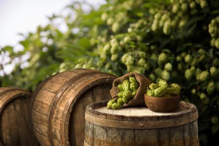 hopfield: glass of beer with hop cones in the hop field