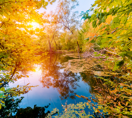 delightful: River in a delightful autumn forest at sunny day.