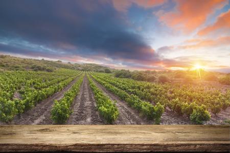 Rode wijn met vat op wijngaard in groen Toscanië, Italië