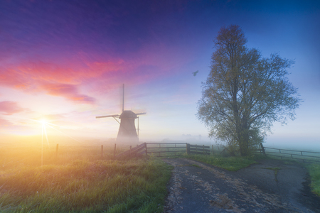 Landscape of Netherlands bouquet of tulips and windmills in the Netherlands. Stock Photo