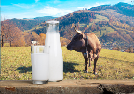 vacas lecheras: A bottle of milk and glass of milk on a wooden table on a blue background Foto de archivo