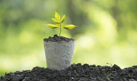 Ecological friendly and sustainable environment concept with tree planting growing on volunteers hands. Stock Photo
