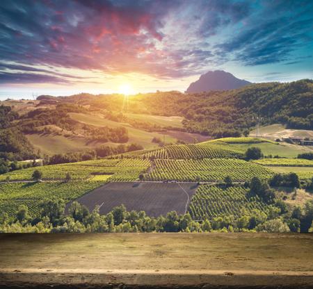 Tuscan vineyardsThe sunset on the vineyards of the Bolgheri wine