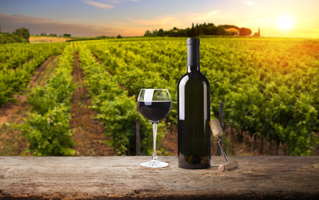 Extra wide panoramic shot of a summer vineyard shot at sunset Stock Photo
