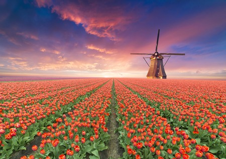 The road leading to the Dutch windmills from the canal in Rotterdam. Holland. Netherlands Stockfoto