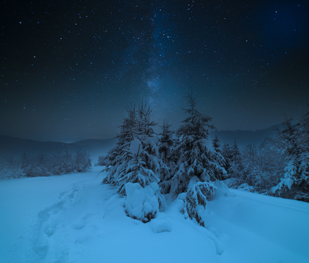 snowy meadow in spruce forest at night in full moon light Stock Photo